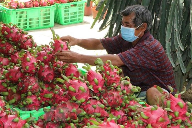 Potential grows for vegetable and fruit exports to US hinh anh 1
