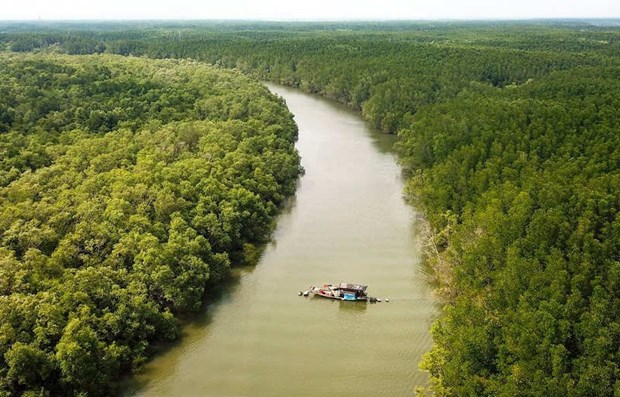 Project looks to protect, develop coastal forests hinh anh 1