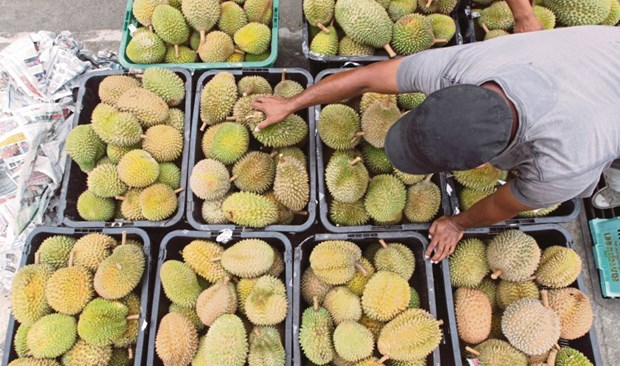 Malaysia enjoys 107 percent increase in durian export value in five years hinh anh 1