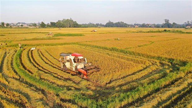 Vietnam likely to achieve rice export target this year hinh anh 1