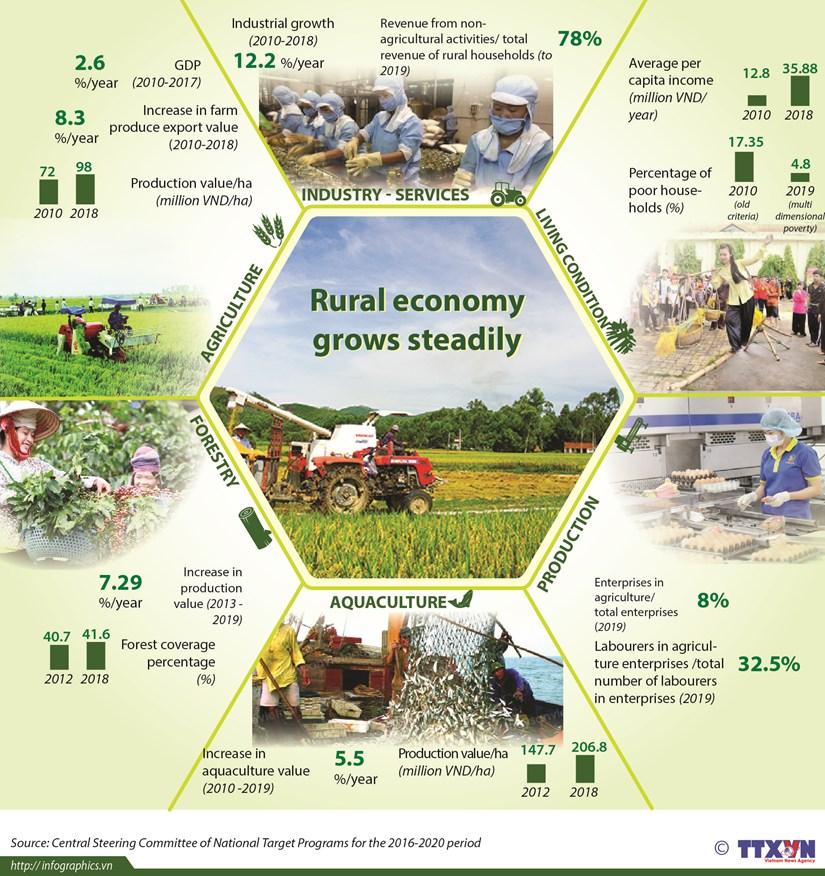 Rural economy grows steadily hinh anh 1