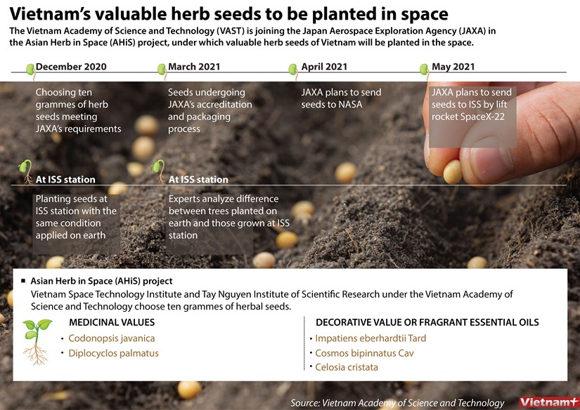 Vietnam's valuable herb seeds to be planted in space hinh anh 1