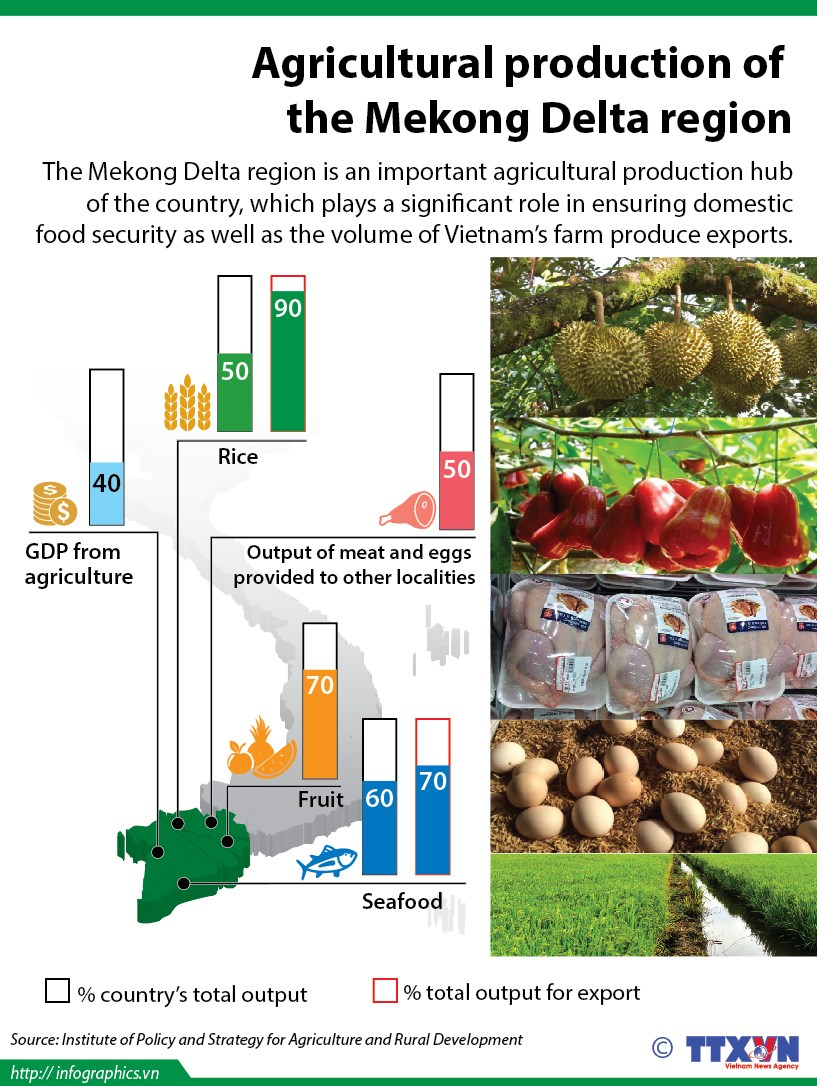 Mekong Delta agricultural production ensures domestic food security hinh anh 1