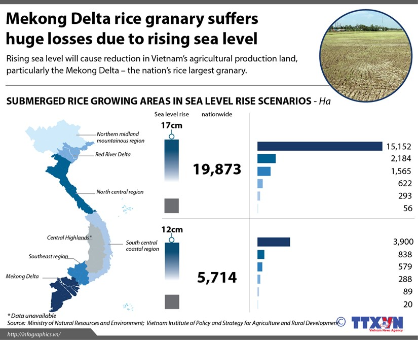 Mekong Delta rice granary suffers huge losses due to rising sea level hinh anh 1