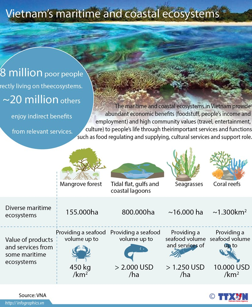 Vietnam rich in maritime ecosystems hinh anh 1