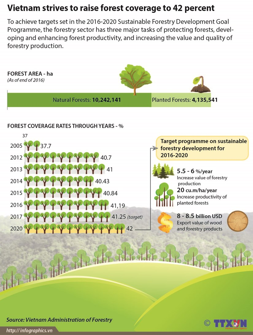 Vietnam strives to raise forest coverage to 42 percent hinh anh 1