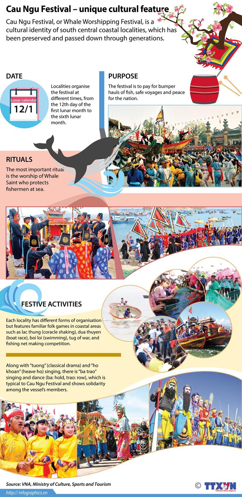 Cau Ngu Festival – unique cultural feature of coastal areas hinh anh 1