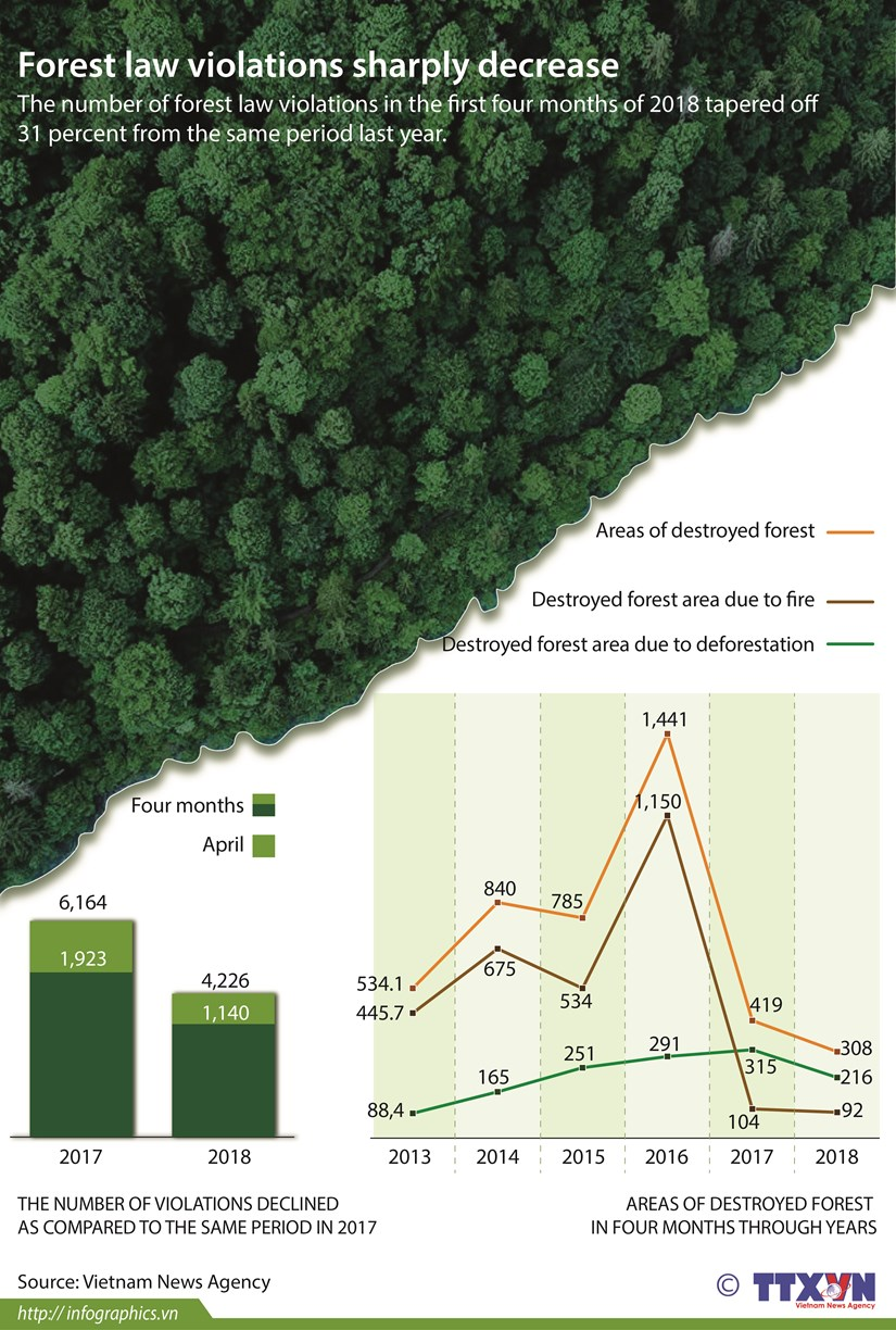 Forest law violations sharply decrease hinh anh 1
