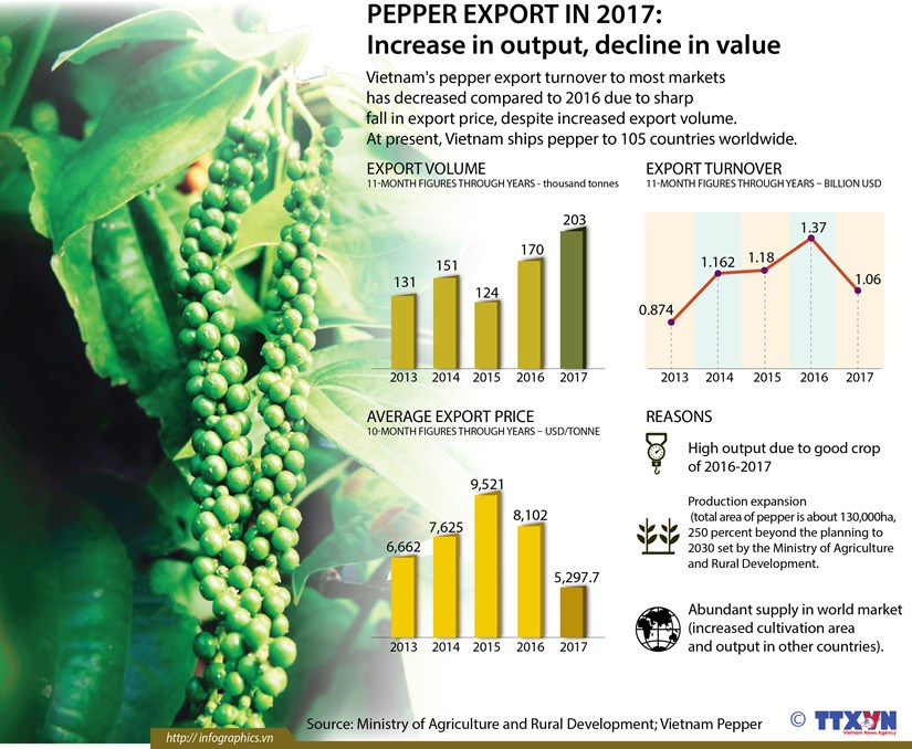 Pepper export in 2017: Increase in output, decline in value hinh anh 1