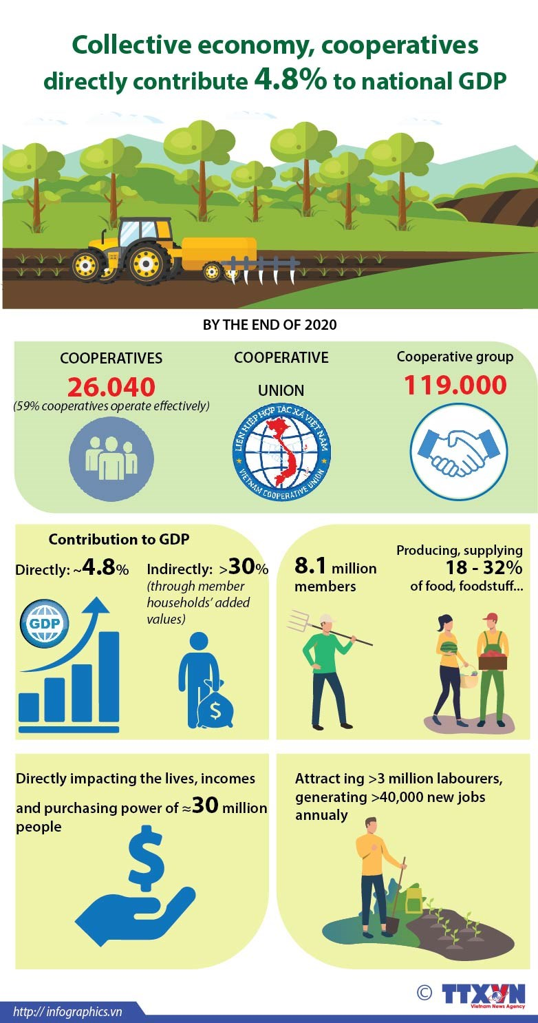 Collective economy, cooperatives directly contribute 4.8% to national GDP hinh anh 1