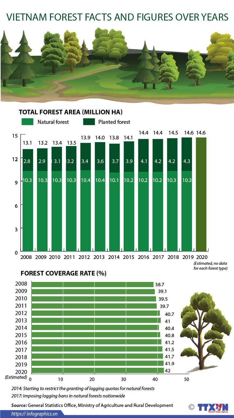 Vietnam forest facts and figures over years hinh anh 1