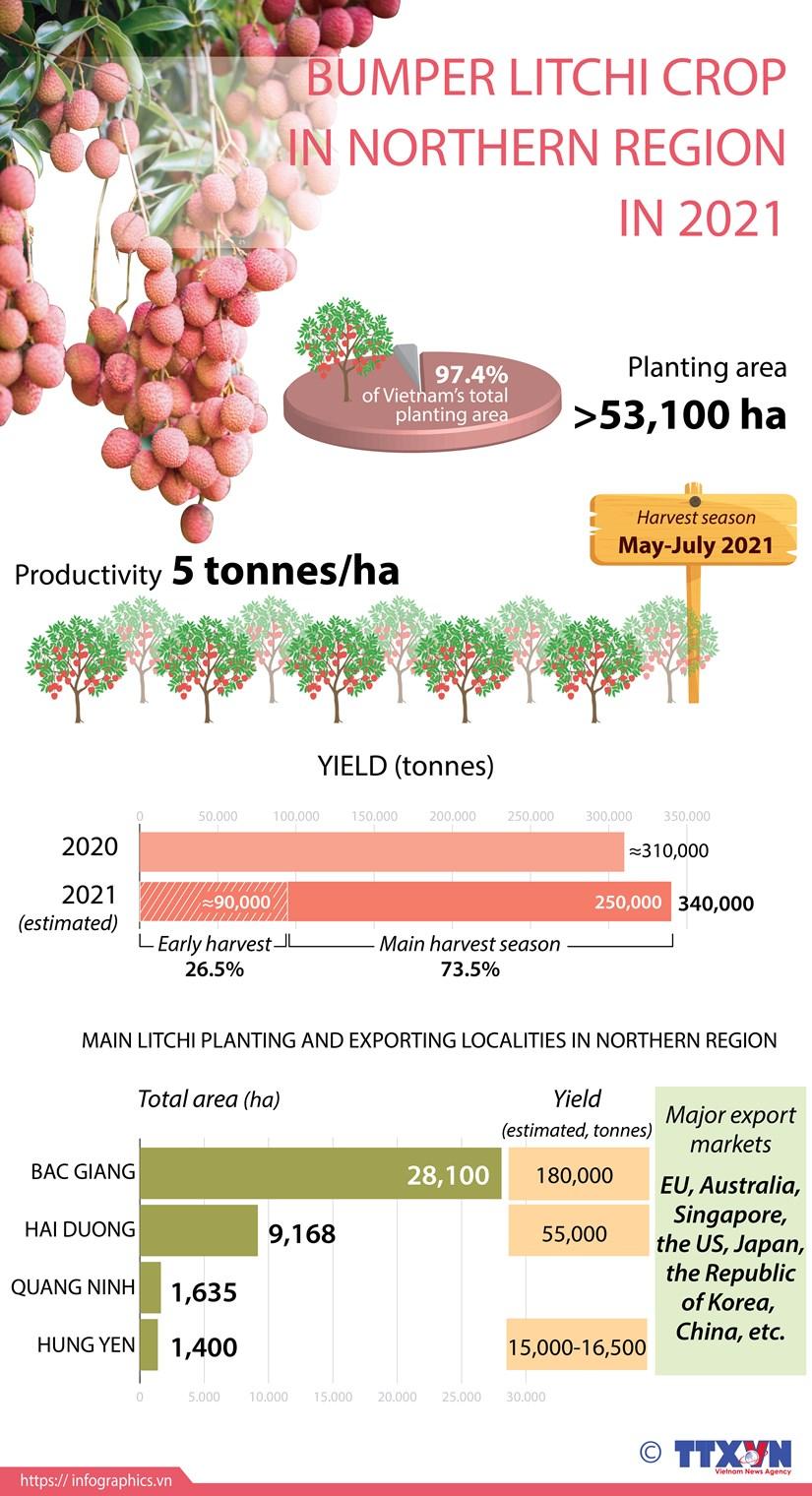 Bumper litchi crop in northern region in 2021 hinh anh 1