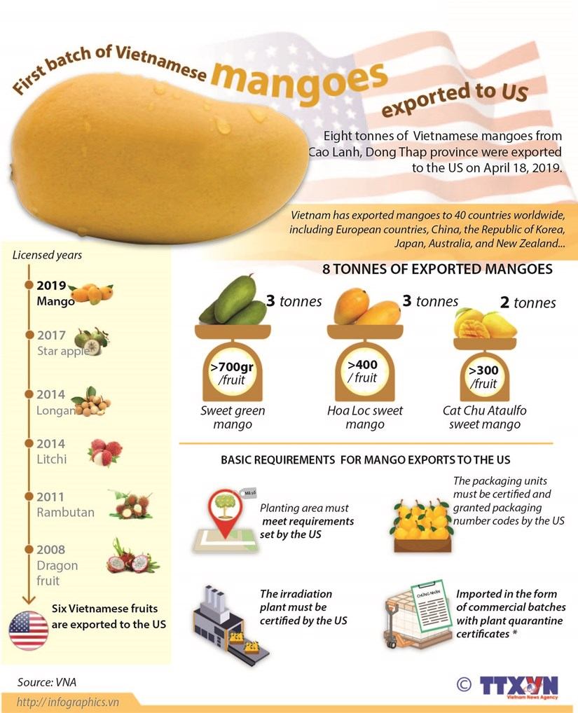 First batch of Vietnamese mangoes exported to US hinh anh 1