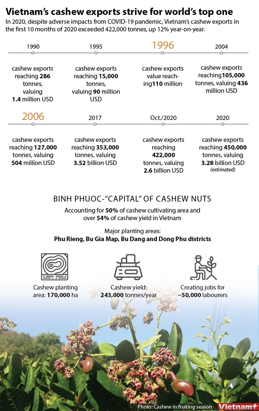 Vietnam's cashew exports strives for world's top one hinh anh 1