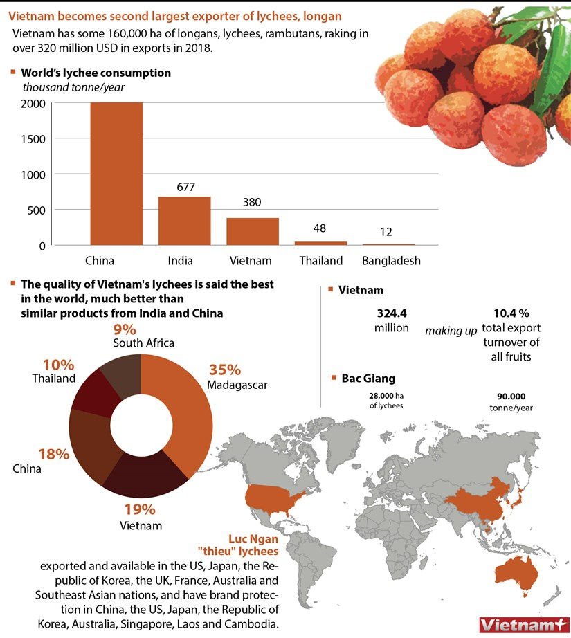 Vietnam becomes second largest exporter of lychees, longan hinh anh 1