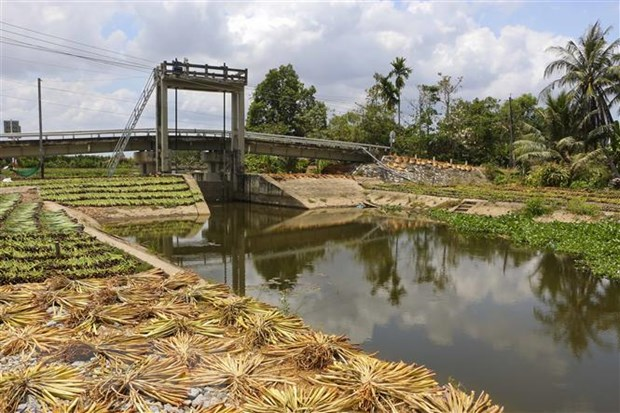 Saltwater intrusion in Mekong Delta to be problematic until late April