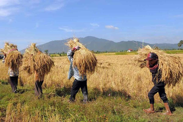 Cambodia: Agricultural exports surpass 2 billion USD in Q1
